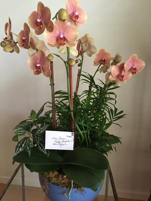 orchid funeral Remembrance of Life flowers